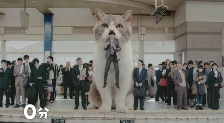 Anuncio de chicles con un gato gigante class=
