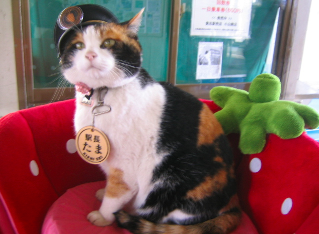 tama the cat