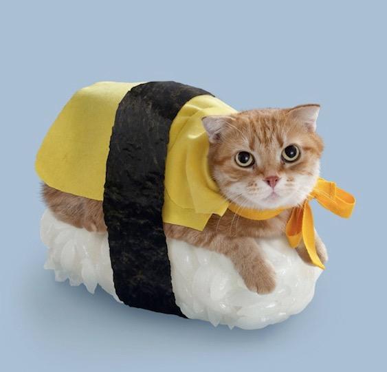 Gatos sushi class=