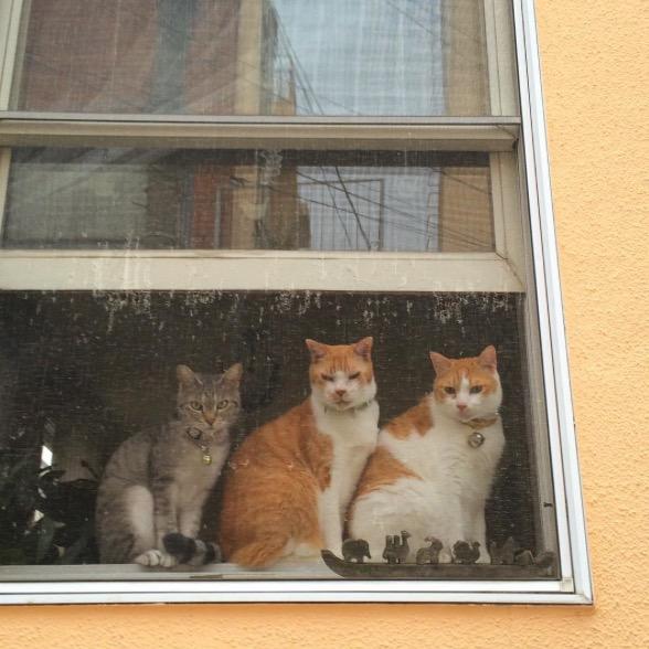 La población de gatos superará a la de perros en Japón class=