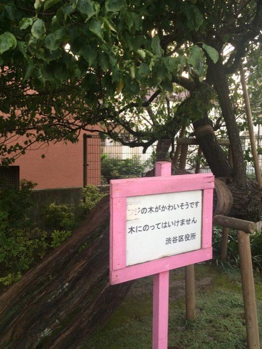 Pobre árbol class=
