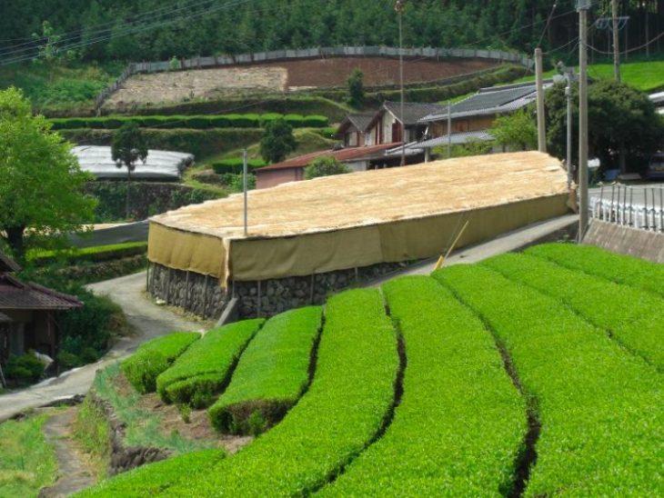 Bebiendo el mejor té verde: Gyokuro y Matcha class=